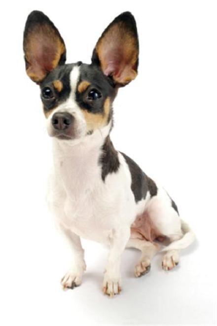 Types of Small Dogs Image Gallery