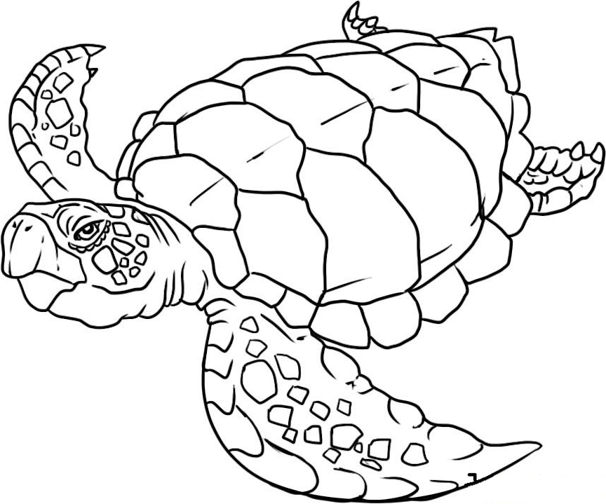 Sea Animals Coloring Pages And Other Top 10 Themed Coloring Challenges