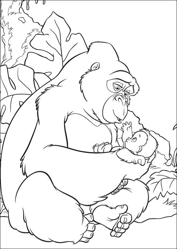 lemur phylogenetics gopher coloring page hairy eared dwarf lemur