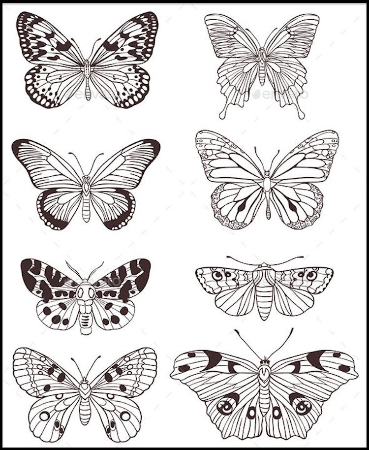 Butterfly Coloring Pages And Other Free Printable Coloring Page Themes