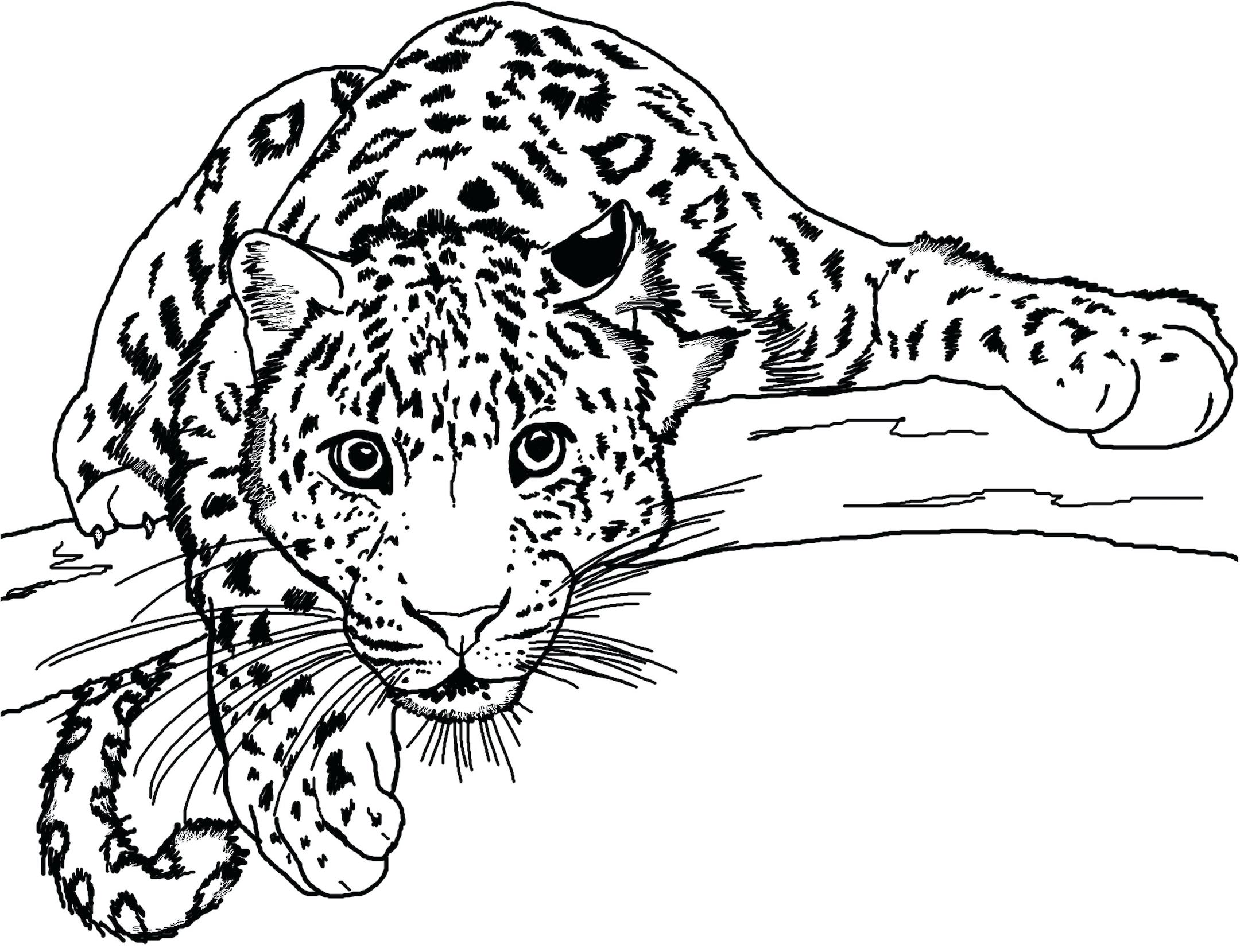 Top 10 Wild Cat Coloring Pages And More Free Printable Coloring Themes